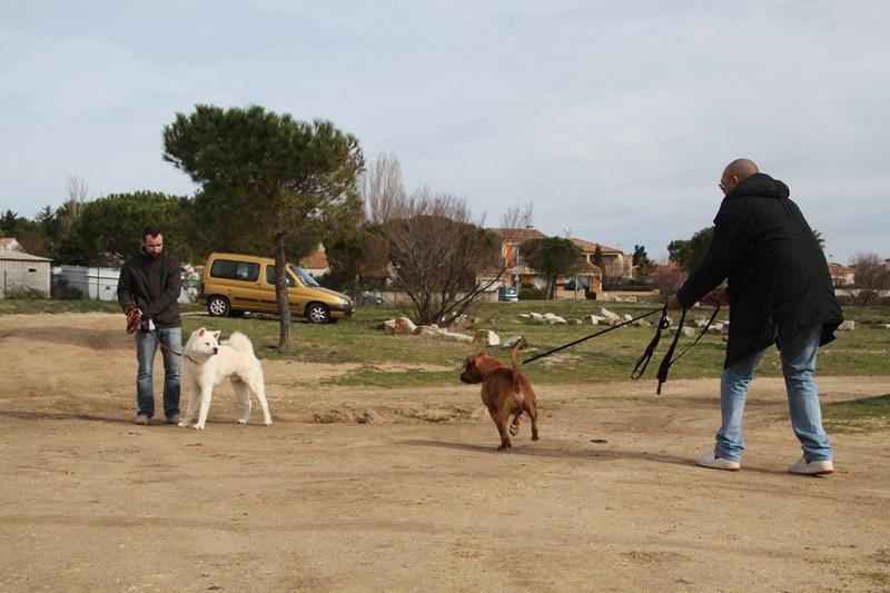 DogEcole_003